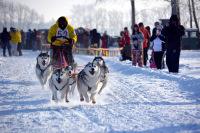 Стрела Ульгеня 2014 - гонщик №52 и шесть собак